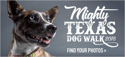 homepagectabox-dogwalk.jpg